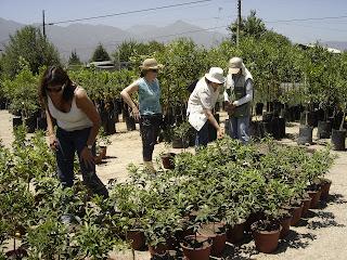 Tiempo jardin tour por quillota for Viveros en quillota