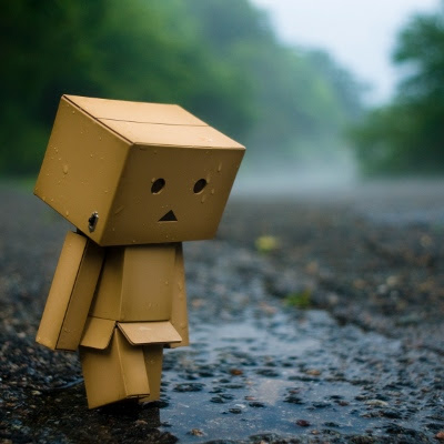 Danbo at puddle