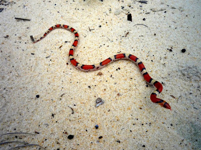 Tips For Field Herping Field Herping Tips