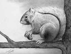 pencil drawings drawing sketches sketch animals squirrel nature realistic cool mine suzanne schaefer animal easy squirrels beginners collections google paintingvalley