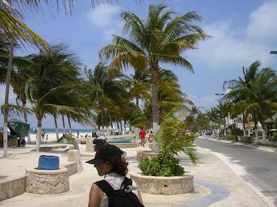 Palmieri pe insula tropicala