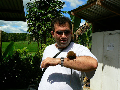 Imagini Filipine: cu un tarsier, Bohol