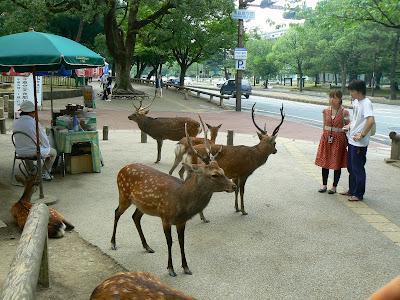 Obiective turistice Japonia: cerbi si caprioare in Nara
