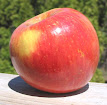 Red apple with yellow patch