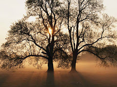 A Natureza reflecte o pensamento humano