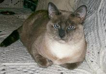 Primadonna Cat!