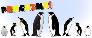Pingüinos vectorizados