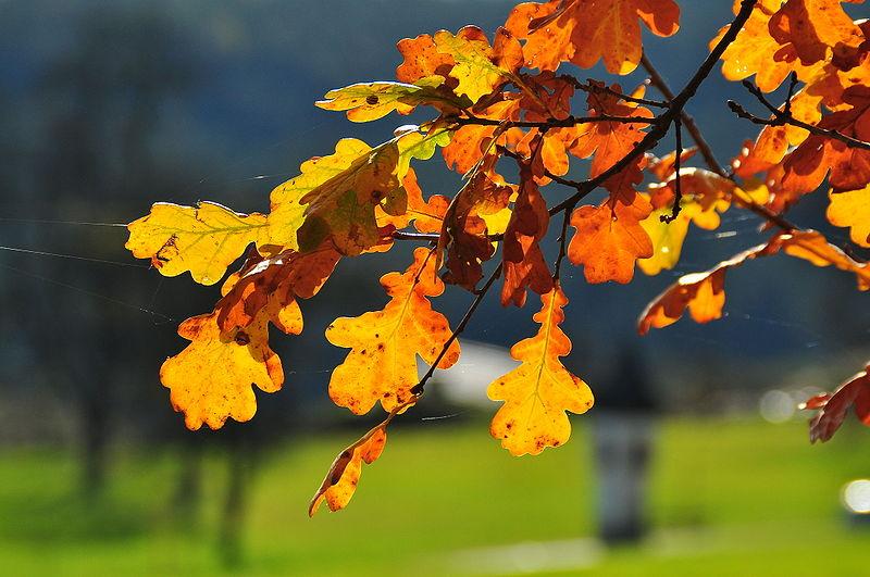 Gedankenabfall Die Blattfarbung Im Herbst 1 Wertstoffrecycling