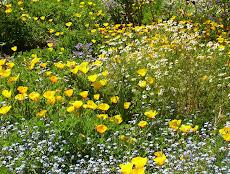 Blooming Spring