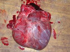 Dilatación cardíaca 1 (canino)