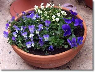 Piante in vaso ciotola fiorita con pochi spiccioli for Piante acquisto
