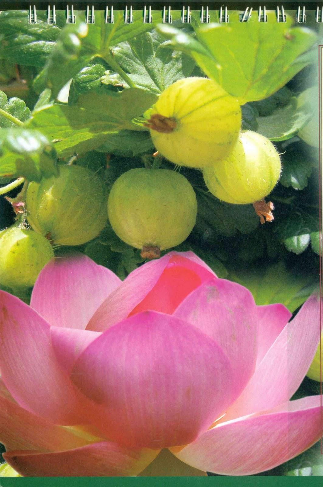 Prakruti Mother Nature Trees Plants Herbs Of Traditional