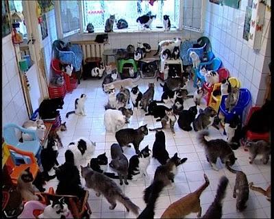 Crazy Russian Cat Lady 98