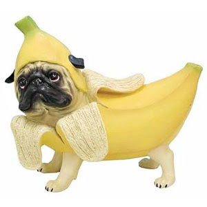 The Daily Puglet: BANANA PUG (the sequel)