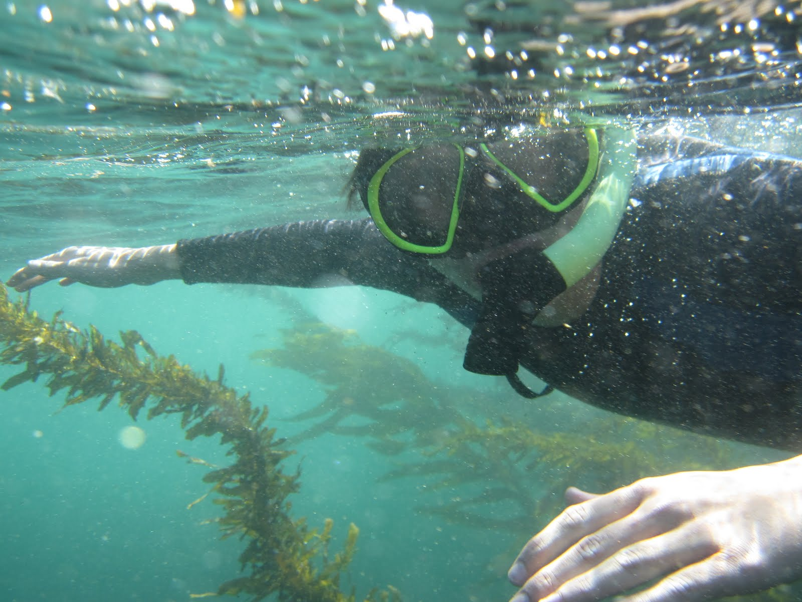 Happy Trails: Snorkeling At Laguna Beach