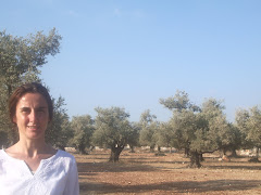 Olivers de Palestina i l'olivera de els Torms