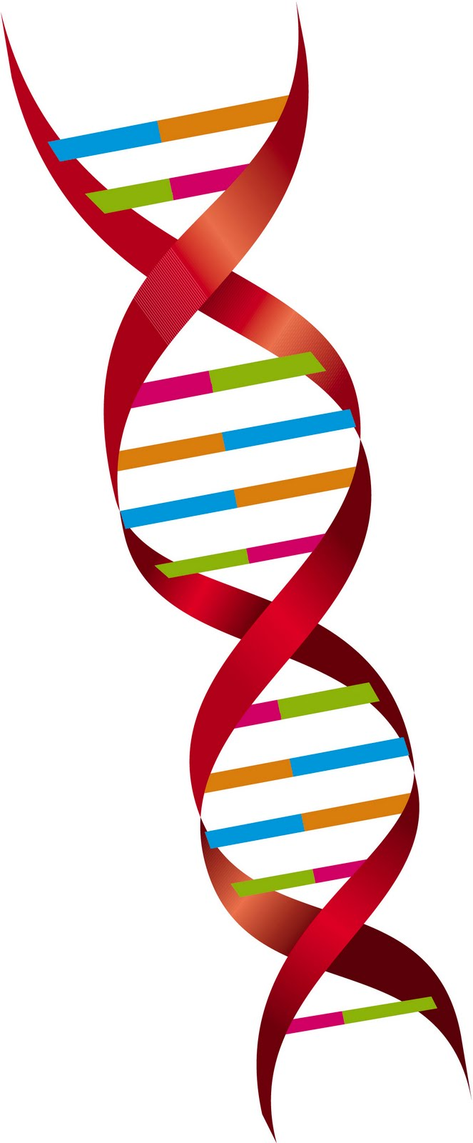 Hcv new drugs personalized medicine genetic makeup to for Personalized dna art