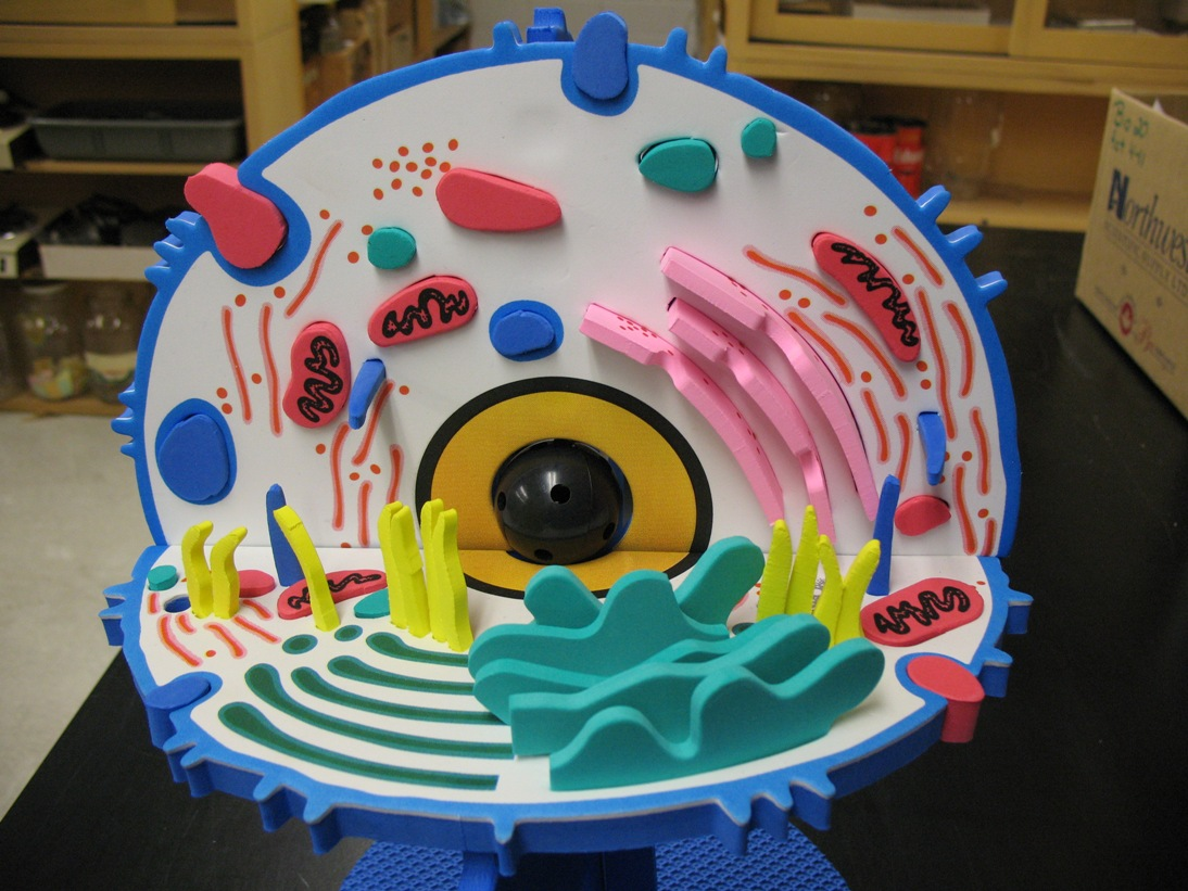 Plant Cell Project Ideas For Kids 3d Diagram Photo15