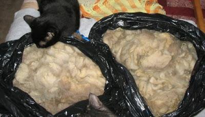 2 lovely bags of fleece undergoing inspection.