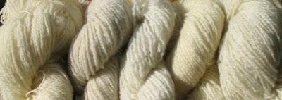 5 Shetland whites.
