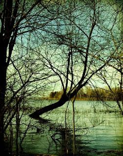 irene suchocki tree