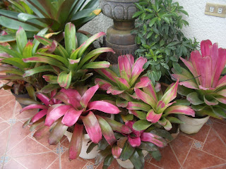 Bromeliads Can Be Used In The Landscape Frost Free Areas Of State Or Grown Containers That Moved Indoors Where Freezes Occur