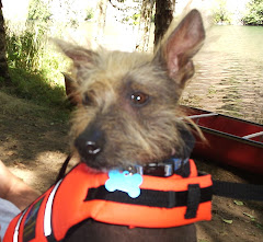 Lifejacket Moe (safety first)