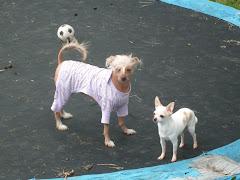 The puppy trampoline!