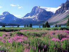 Bow Lake - Canadá