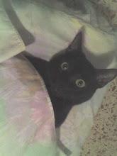 El gato acostado
