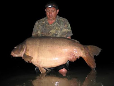 The Scar Les Graviers 88lb
