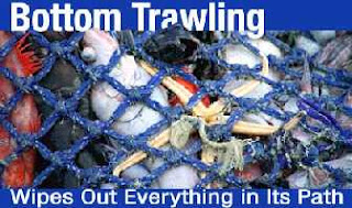 the result of bottom trawling