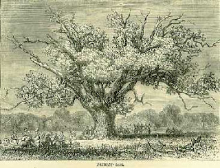 artist's impression of the ancient Fairlop Oak