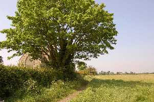 Land on Aldborough Hatch Farm adjacent to St. Peter's Church.
