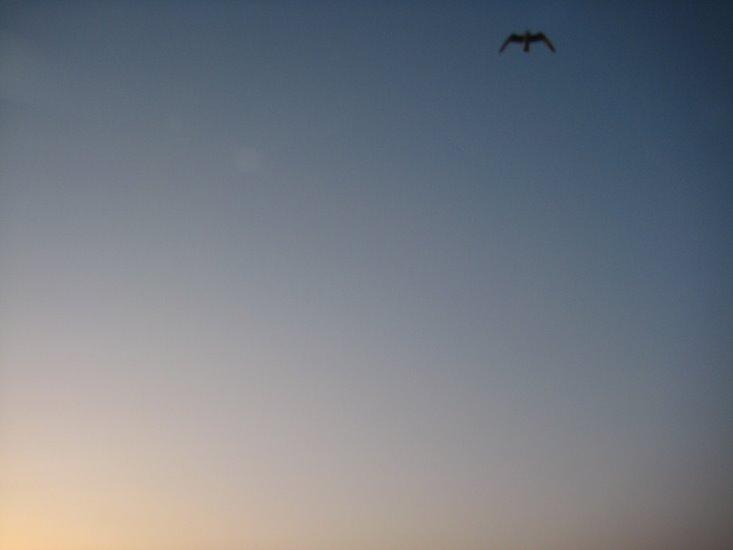 [bird_sky.jpg]