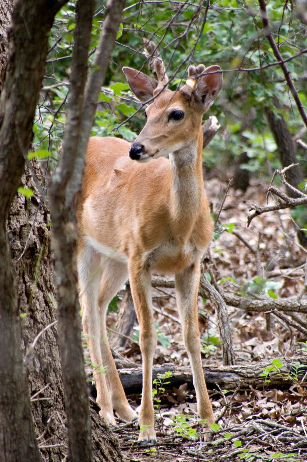 Artistic Images Photography: The Baby Deer Are Arriving!