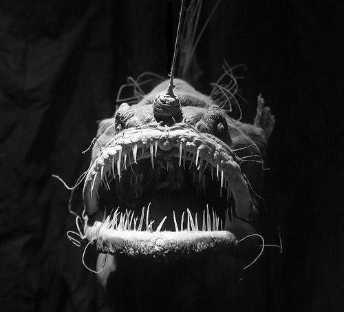 Mundo tentacular monstros das profundezas animais dos for Angler fish adaptations