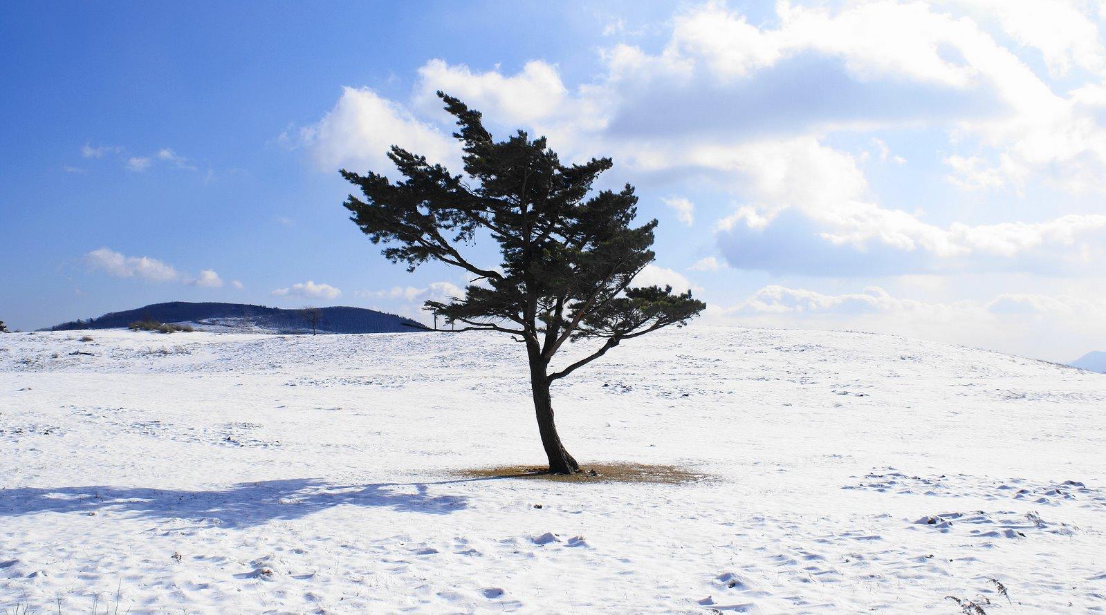 [lone+tree+near+maebong+odaesan.JPG]