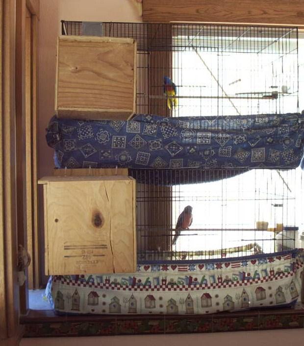 Splendid nest box above, Bourke below.