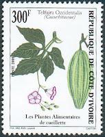 Telfairia occidentalis Hook f