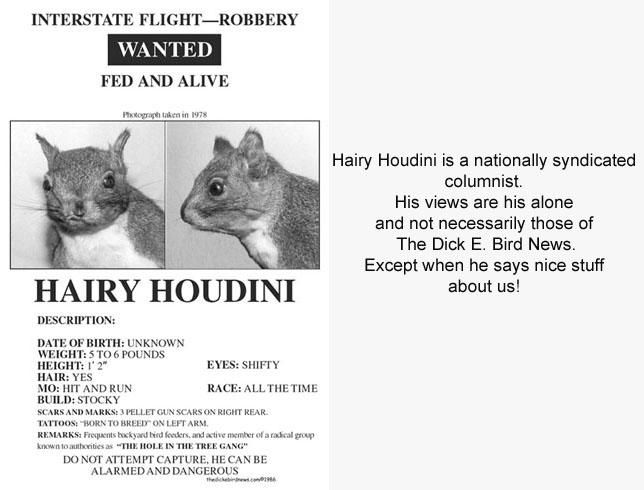 Hairy Houdini Blog