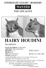 Buy Hairy Houdini Wanted Posters