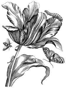 Book Review: Merianu0027s Antique Botanical Prints