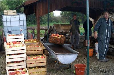 Les pommes du Tourteronnais