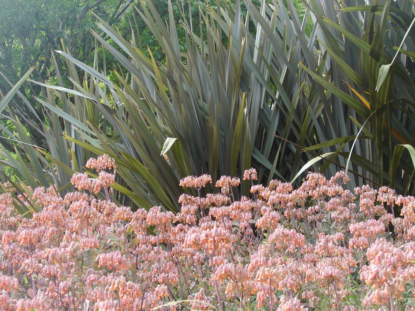 Paisajismo pueblos y jardines plantas para jardines for Plantas para jardin