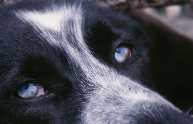 Worf eyes