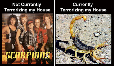 scorpions vs scorpions Scorpions, you have crossed the line
