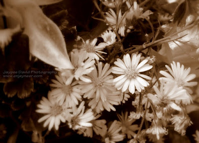 Flower Bouquet, All Saints' Day, Macro Photography, Jaypee David