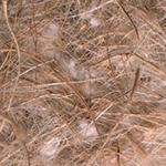 Materijali za gnezda