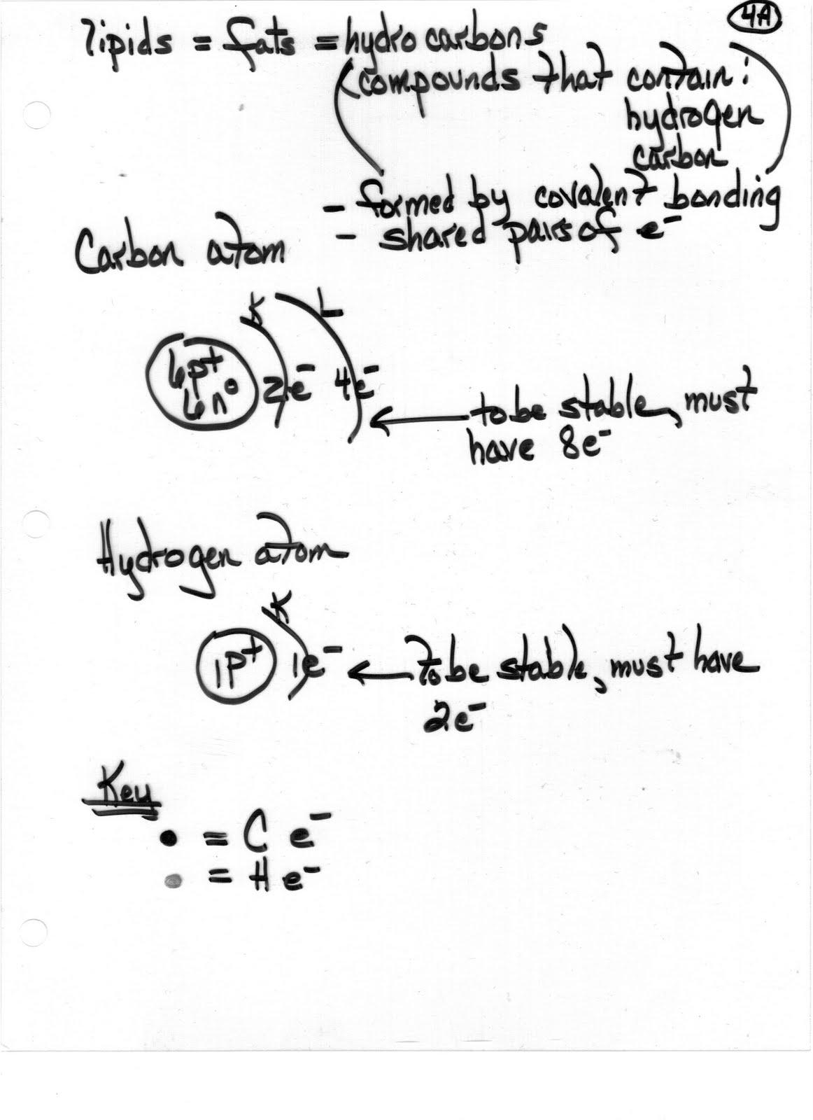 Ms. Friedman's Biology Class: Biochemistry Notes